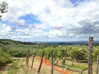 Pilgrim-Paths-Olive-Orchards
