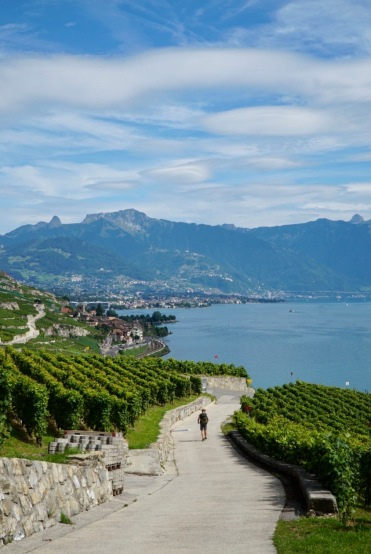Pilgrim-Paths-Overlooking-Vevey