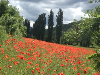 Pilgrim-Paths-Poppies